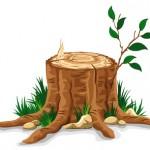 Tree stub