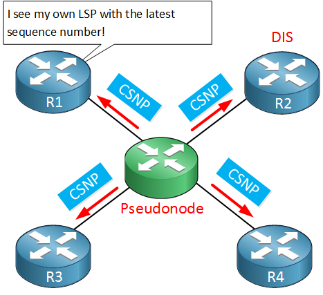 is-is R1 sees own lsp pseudonode csnp